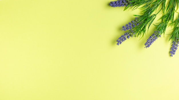Lavender flowers on green wallpaper with copy space Free Photo