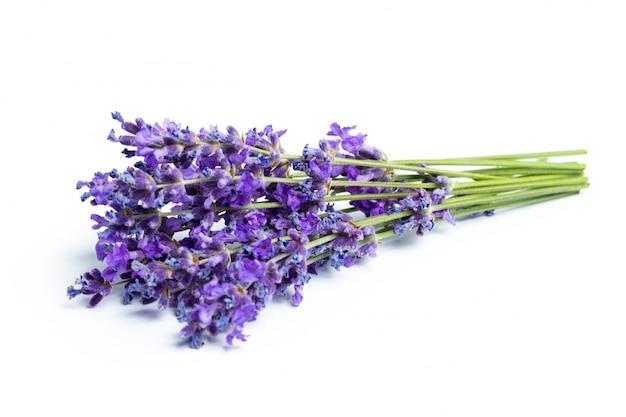 Цветы лаванды на белом фоне Premium Фотографии