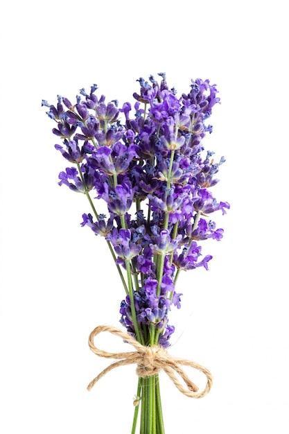 Цветы лаванды на белом Premium Фотографии