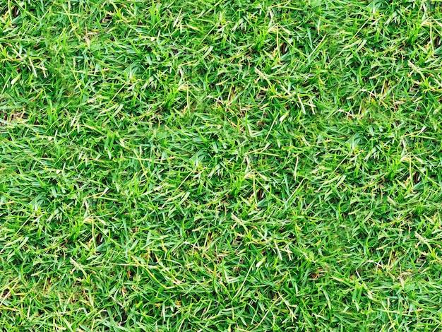 Lawn texture Free Photo