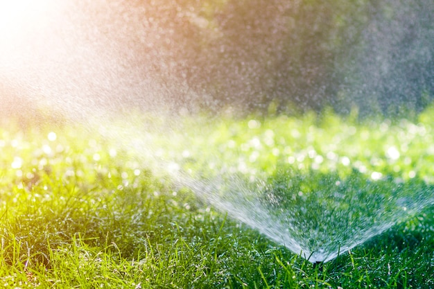 Lawn water sprinkler spraying water over lawn green fresh grass in garden or backyard on hot summer day. automatic watering equipment, lawn maintenance, gardening and tools concept. Premium Photo