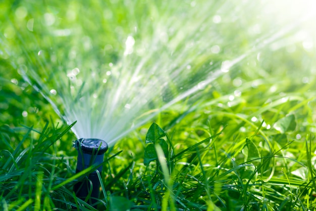Lawn water sprinkler spraying water over lawn green fresh grass in garden  or backyard on hot summer day. automatic watering equipment, lawn  maintenance, gardening and tools concept. | Premium Photo