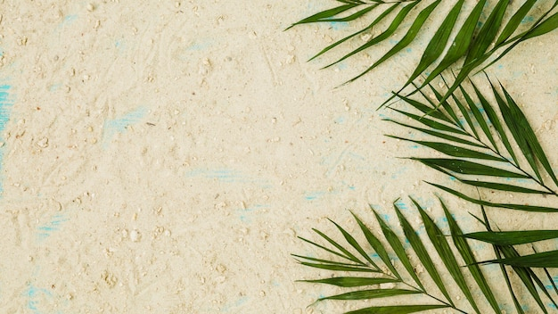 Layout of green leaves among sand Free Photo