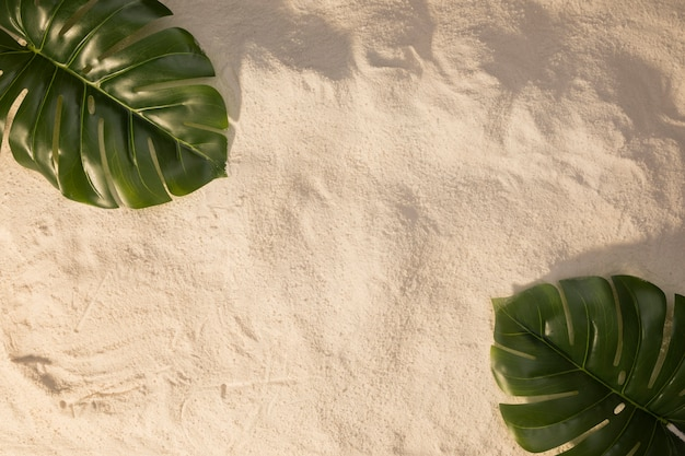 Layout of plant green leaves on sand Free Photo