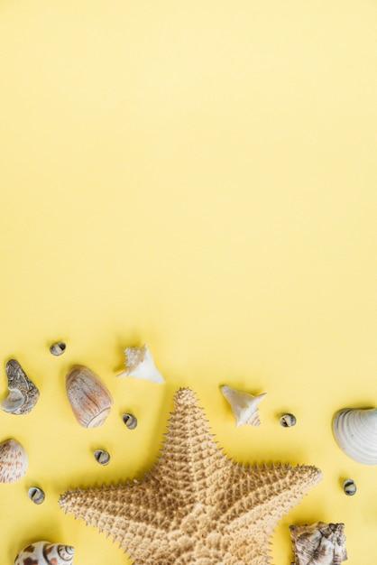 Layout of starfish near seashells Free Photo