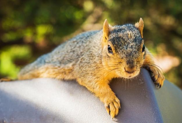Lazy squirrel Free Photo