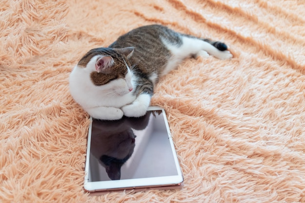 Lazy tabby cat lies next to a tablet on the couch. winter or autumn weekend concept, top view. Premium Photo