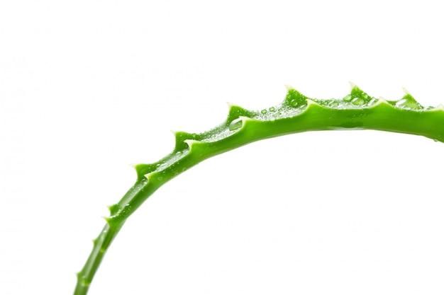 Leaf aloe vera isolated Premium Photo