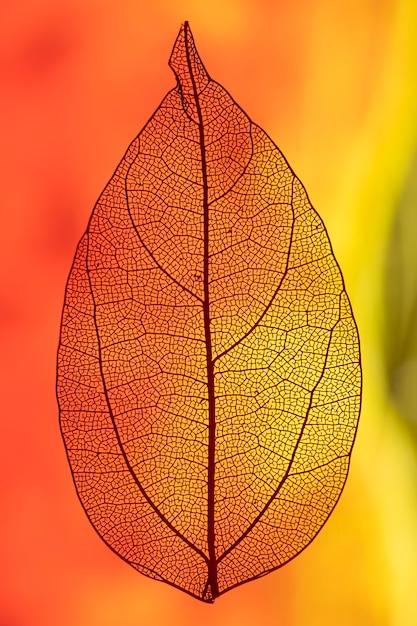 赤とオレンジの光でバックライト付きの葉 無料写真