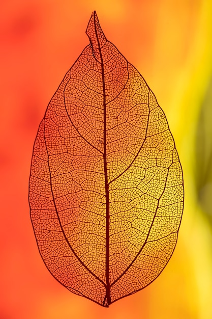 Leaf backlit with red and orange light Free Photo