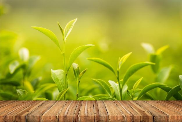 Leaf green tea in the farm in the morning Premium Photo
