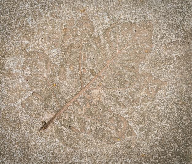 Leaf impression in stone Free Photo