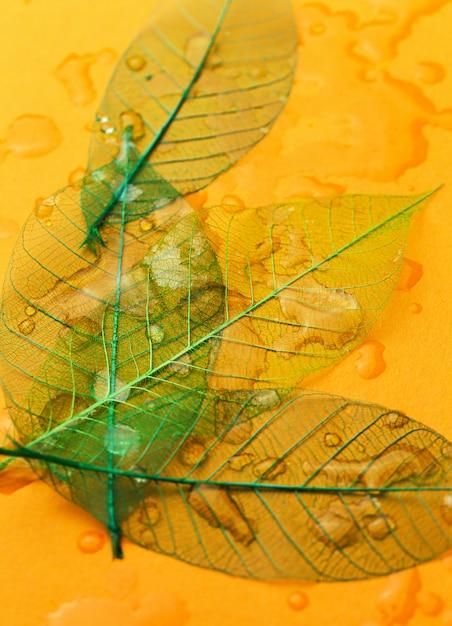テーブルの上の葉 無料写真