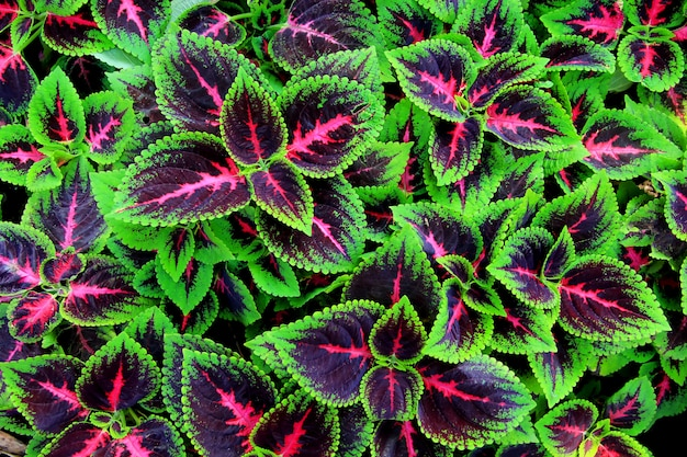 Leaf patterns dominated by green, purple and pink Premium Photo