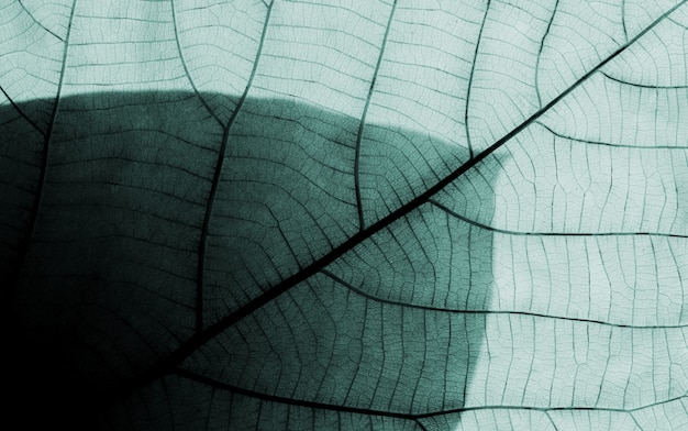 Leaf patterns Premium Photo
