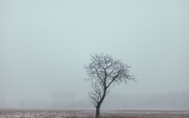 Leafless lonely tree and fog Free Photo
