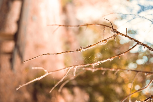 Leafless twig in forest Free Photo