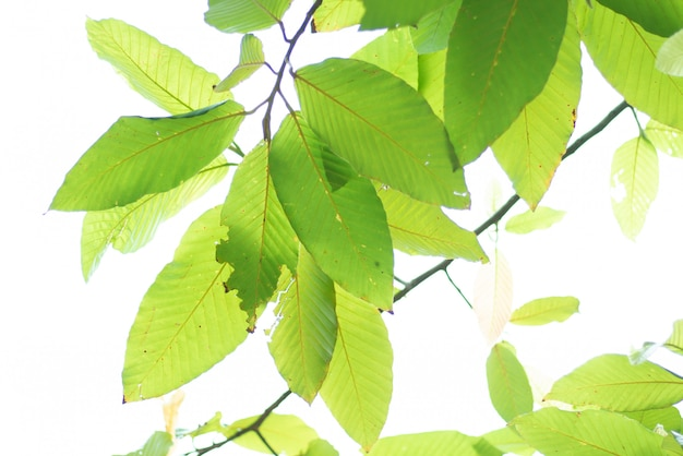 Leaved green nature background. Premium Photo