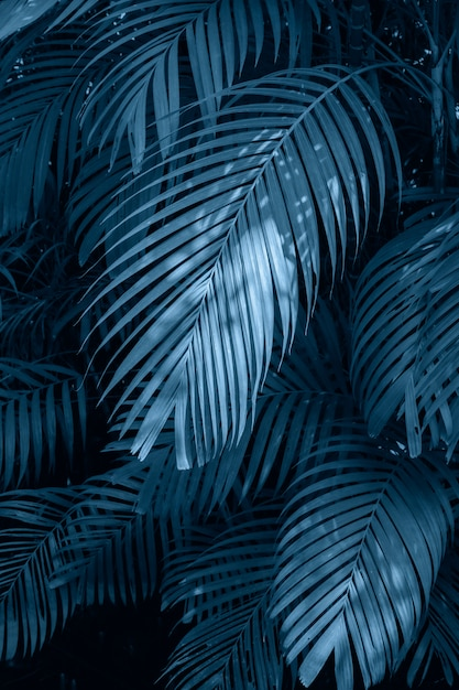 Leaves abstract palm tropical leaves colorful flower on dark tropical foliage nature Premium Photo