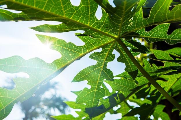 葉と照明のキラキラ背景 Premium写真
