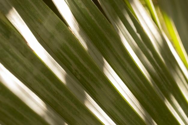 Lascia la disposizione sfondo organico Foto Gratuite