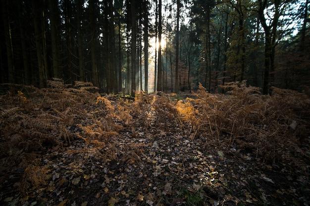 Foglie e rami che coprono il terreno di una foresta circondata da alberi in autunno Foto Gratuite