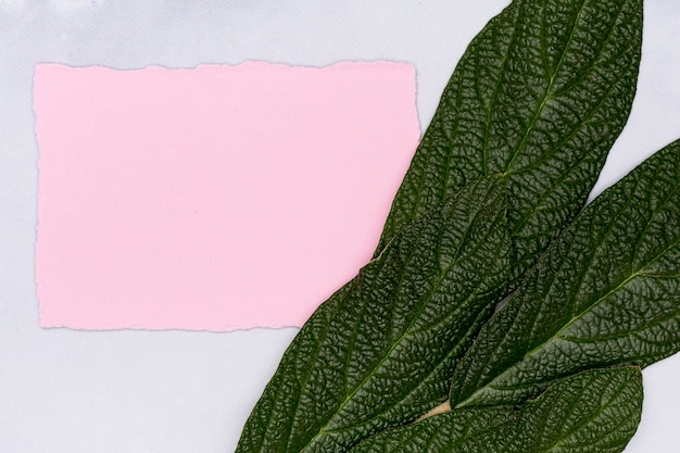 Leaves in detail with empty pink card Free Photo