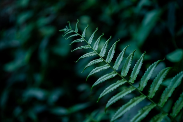Leaves from nature that are abundant in the rainy season, natural concepts Premium Photo