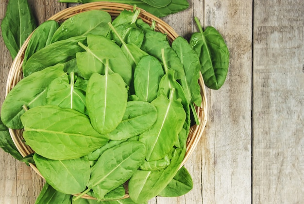 The leaves of greens, sorrel and spinach. selective focus. Premium Photo