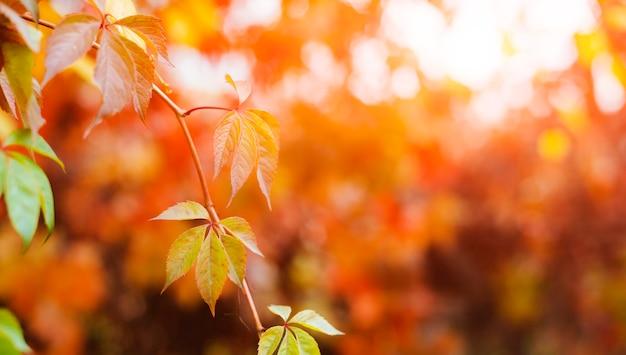 Листья вьюнка на рассвете Бесплатные Фотографии