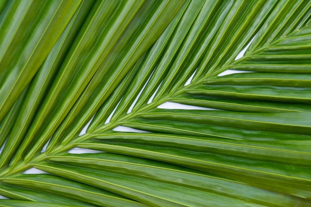 Leaves palm green background Premium Photo