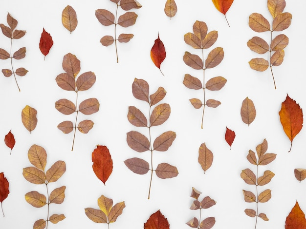 Leaves pattern background Free Photo