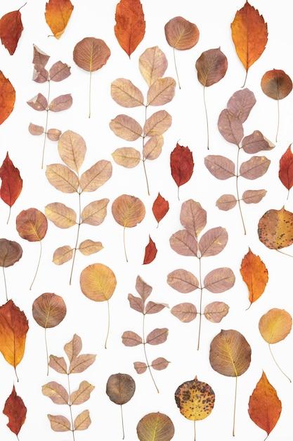 나뭇잎 패턴 배경 무료 사진