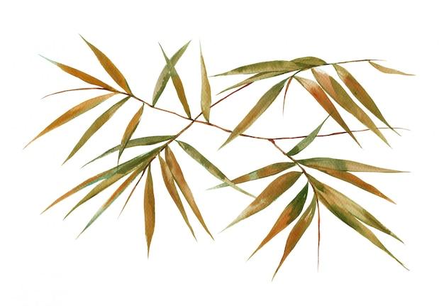白のleavesの葉の水彩イラスト絵画 Premium写真