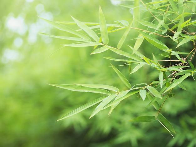 熱帯雨林で新鮮な緑のleavesの葉 Premium写真