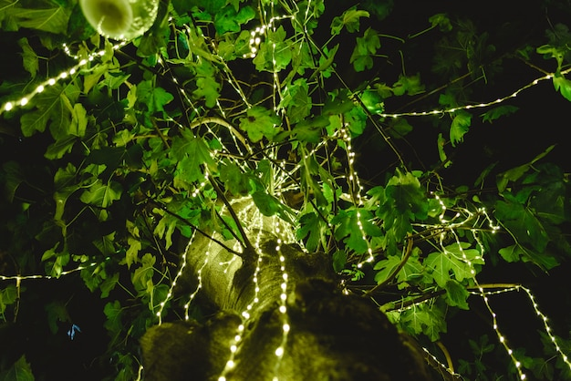 Led lights decorating a tree at night to create a romantic atmosphere at a dinner. Premium Photo