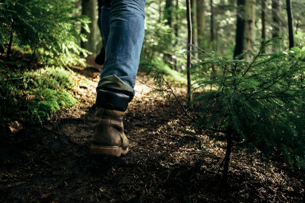 New Technology Takes You For A Walk In The Forests Of The Future