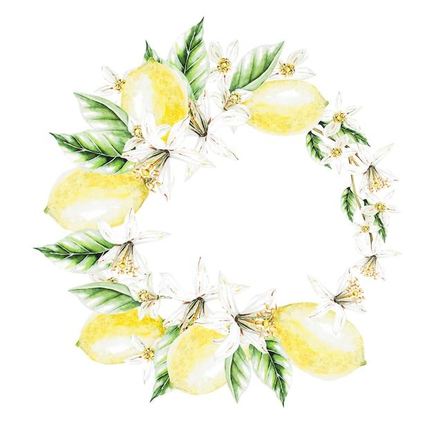 レモン、花と葉、水彩画の花輪。果物。図 Premium写真