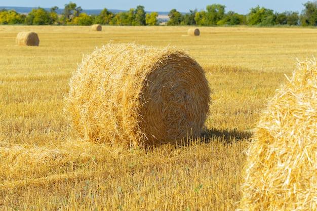 田舎の黄金の干し草のles Premium写真