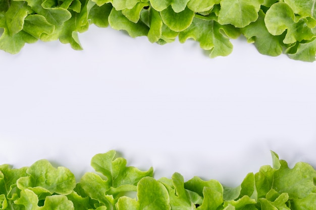 Lettuce  that is placed on a white . Free Photo