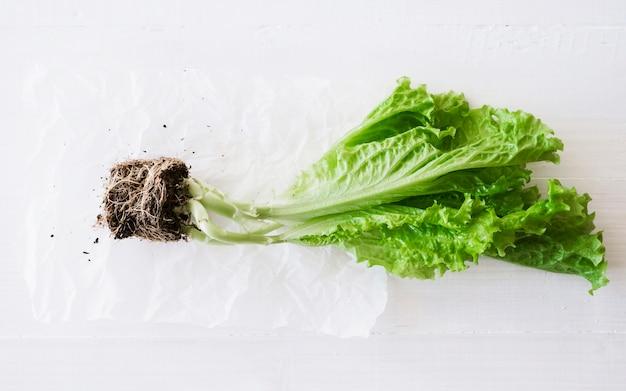 Lettuce Free Photo