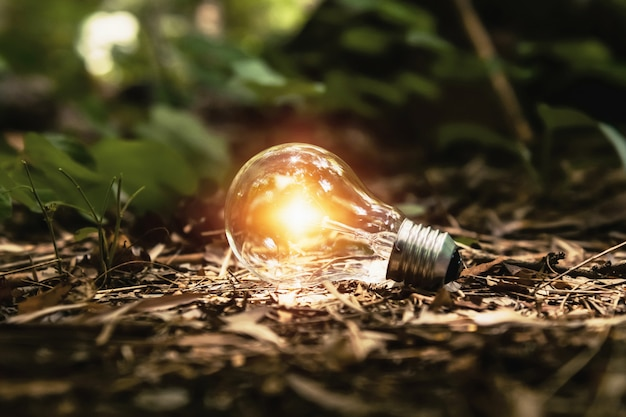 Light bulb on ground with sunshine in forest. concept clean energy Premium Photo