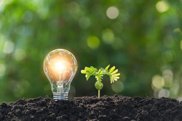 Light bulbs with glowing one. technology and energy concept with light bulbs. Premium Photo