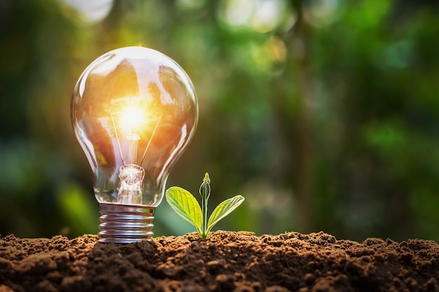 Lightbulb with small plant on soil and sunshine. concept saving energy in nature Premium Photo