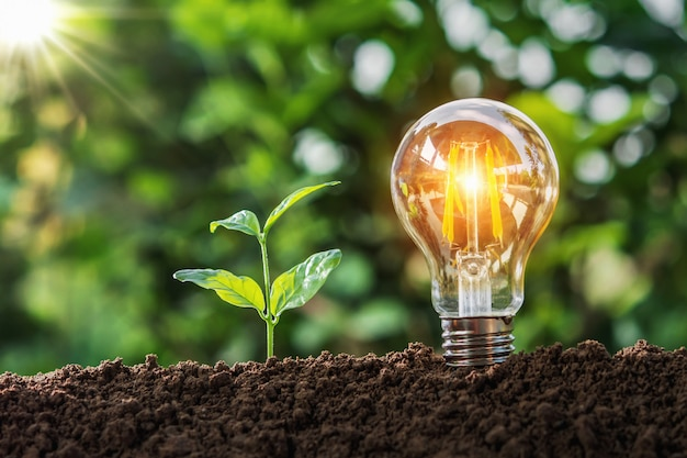 Lightbulb with small tree on soil in nature and sunshine. concept saving Premium Photo