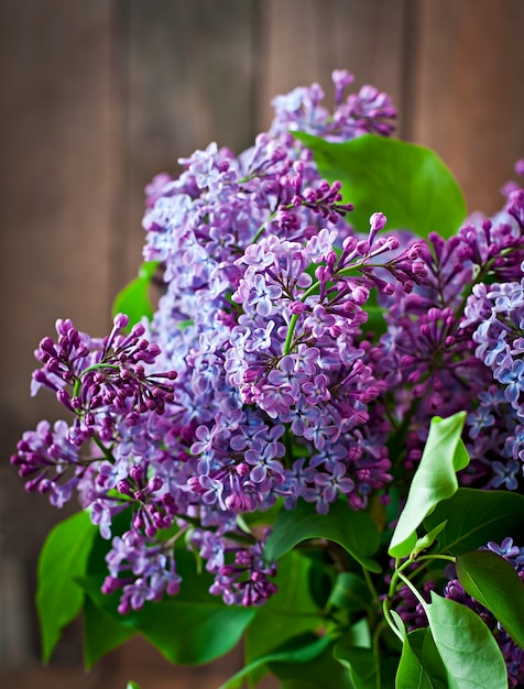 Lilac flowers and leaves in the nature Free Photo