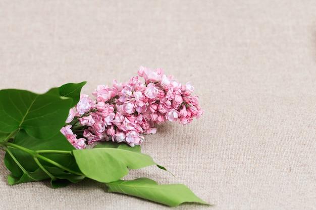 ライラック色の花は綿のテーブルクロスにピンク色。コピースペースと花の背景。 Premium写真