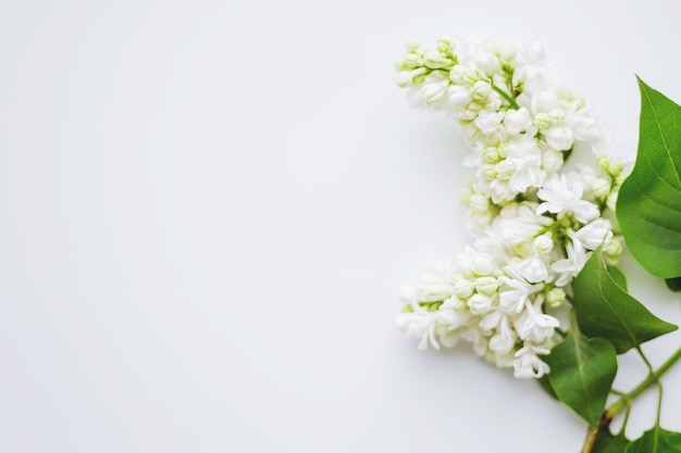 Lilac (syringa) flowers. place for text. Premium Photo