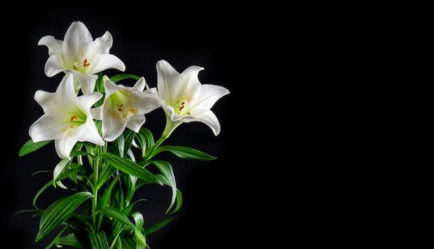 Lily flowers bouquet black background white blossoms   Premium Photo