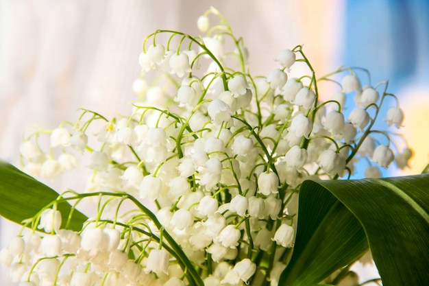 Lily of the valley flowers. natural with blooming lilies of the valley lilies-of-the-valley Premium Photo